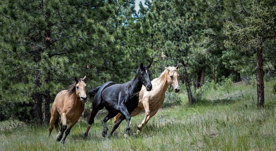 В Кирово-Чепецке цыгане украли лошадей у фермеров