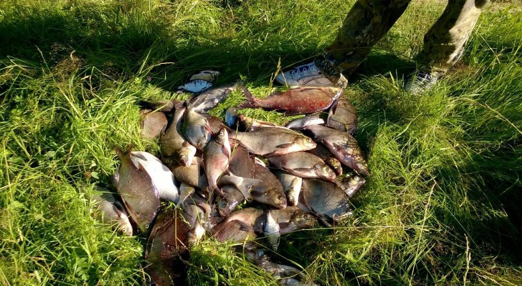 Рыбакам-любителям запретят использовать сети