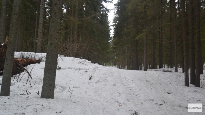 Вывезли в лес и изнасмловали фото 324-753