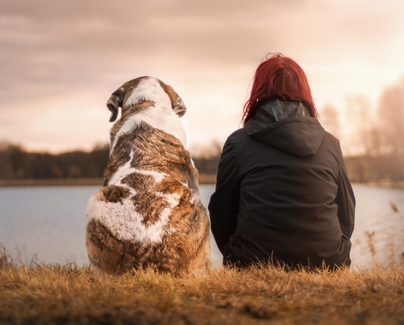 В Кировской области утвердили ограничения по количеству животных в квартире
