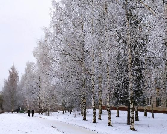 В Кирово-Чепецке новая неделя принесет потепление до +1 и сильный ветер
