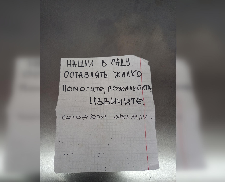 В Кирово-Чепецке нашли хозяев для кошки, из-за которой пришлось эвакуировать ветстанцию