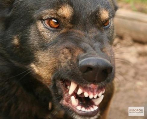 «Собак не отлавливают»: прокуратура провела проверку после нападения пса на ребенка