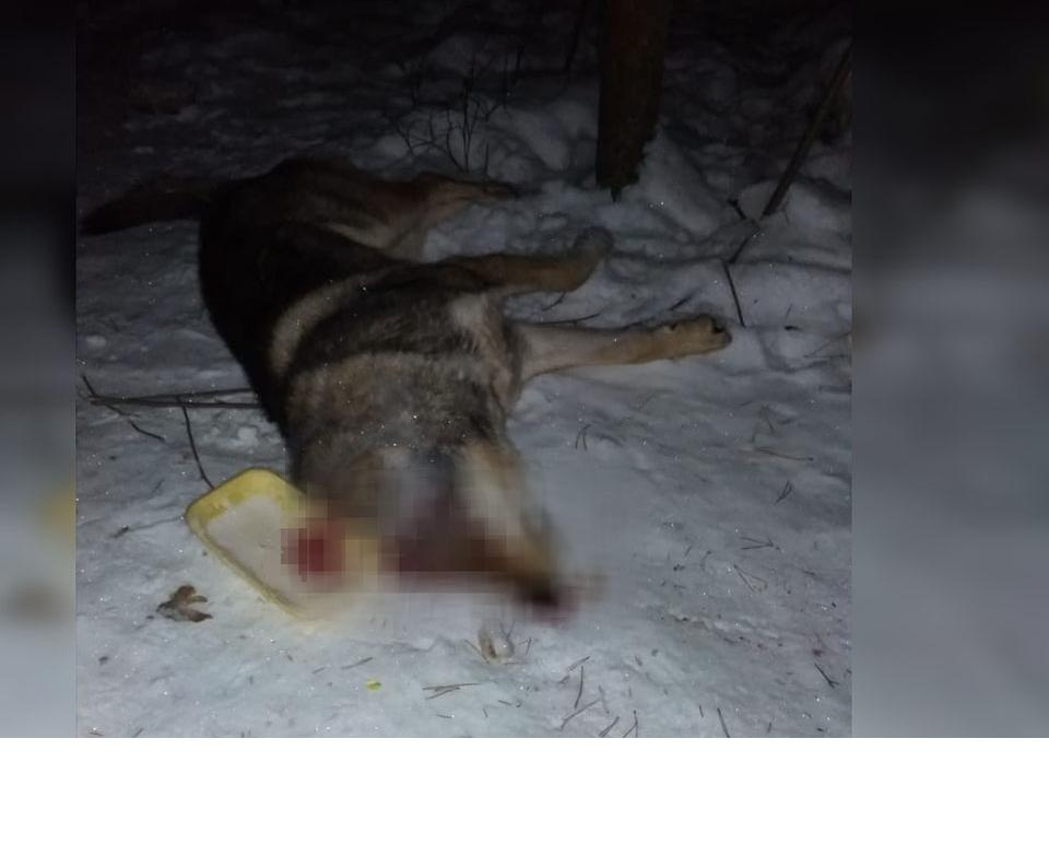 В Кирово-Чепецке жестоко убили собаку