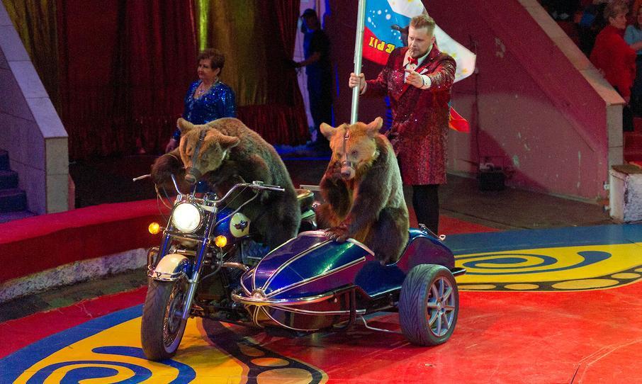 Ручной леопард и номера не для слабонервных: в Киров едет легендарный цирк Филатовых