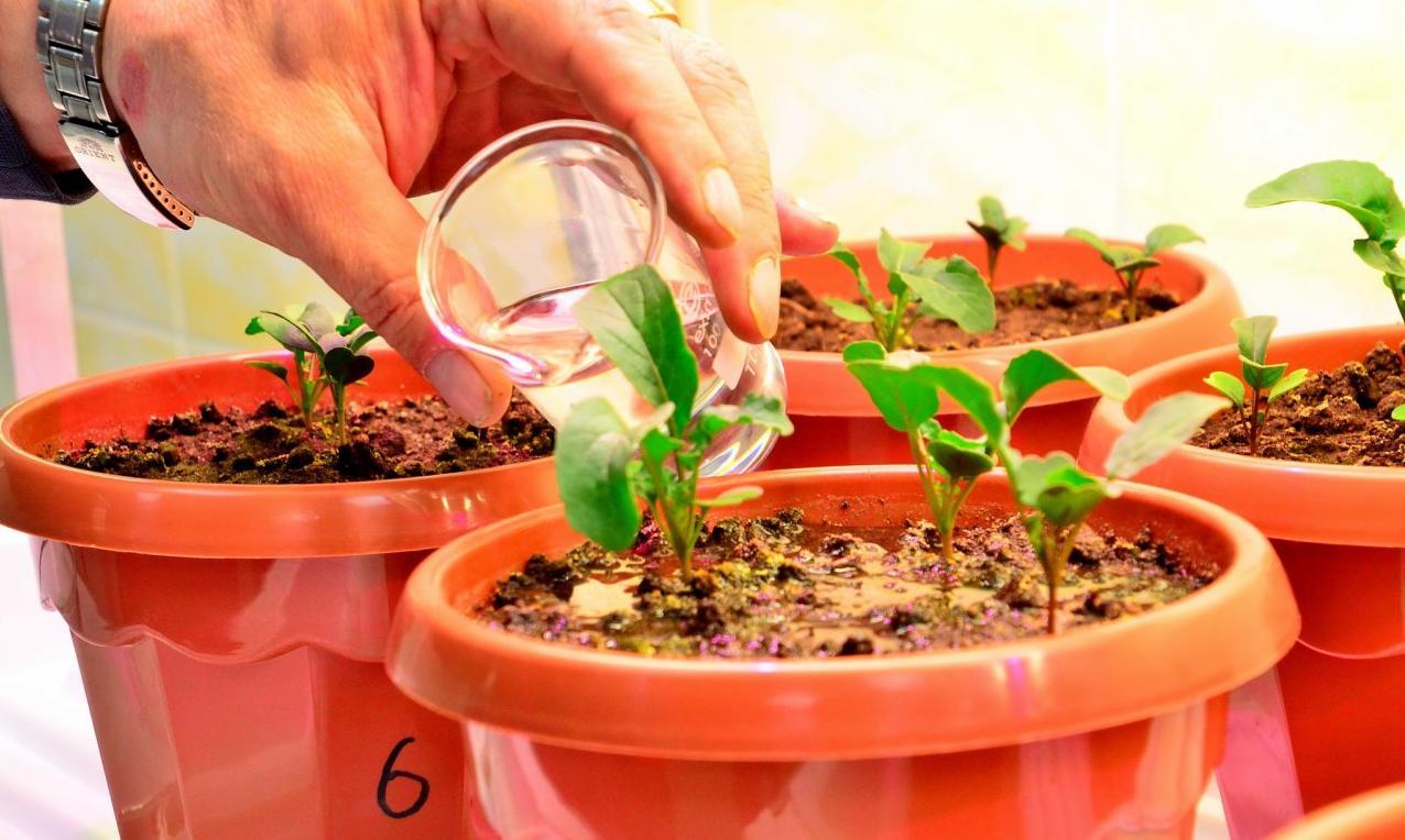 «УРАЛХИМ» ведет разработку производства удобрений нанопоколения