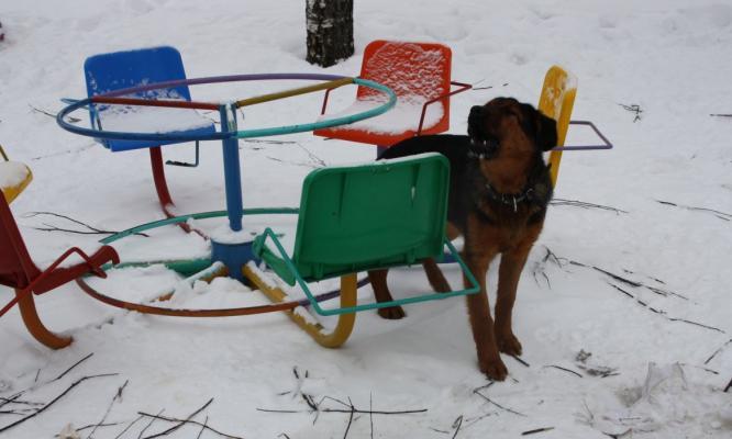 В Кирово-Чепецке будут отлавливать собак накануне переписи населения