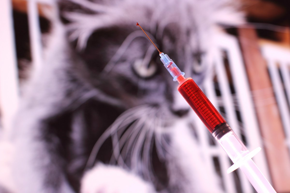 В Кирово-Чепецке бешенная кошка укусила ребенка