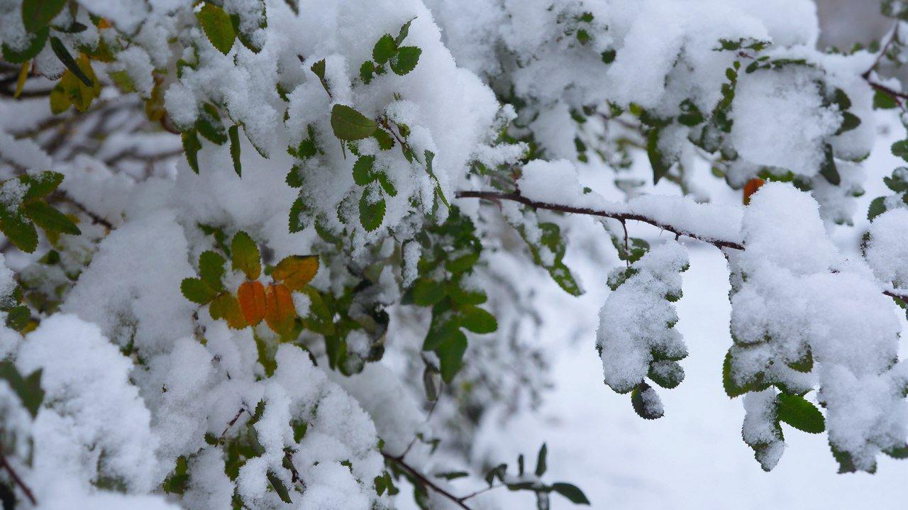 Погода в Кирово-Чепецке: на предстоящей неделе похолодает и будет идти снег