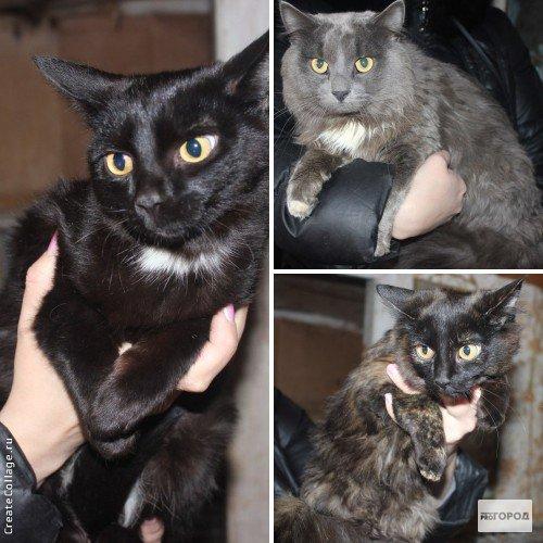 Жительница Кирово-Чепецка выкинула на улицу шесть кошек