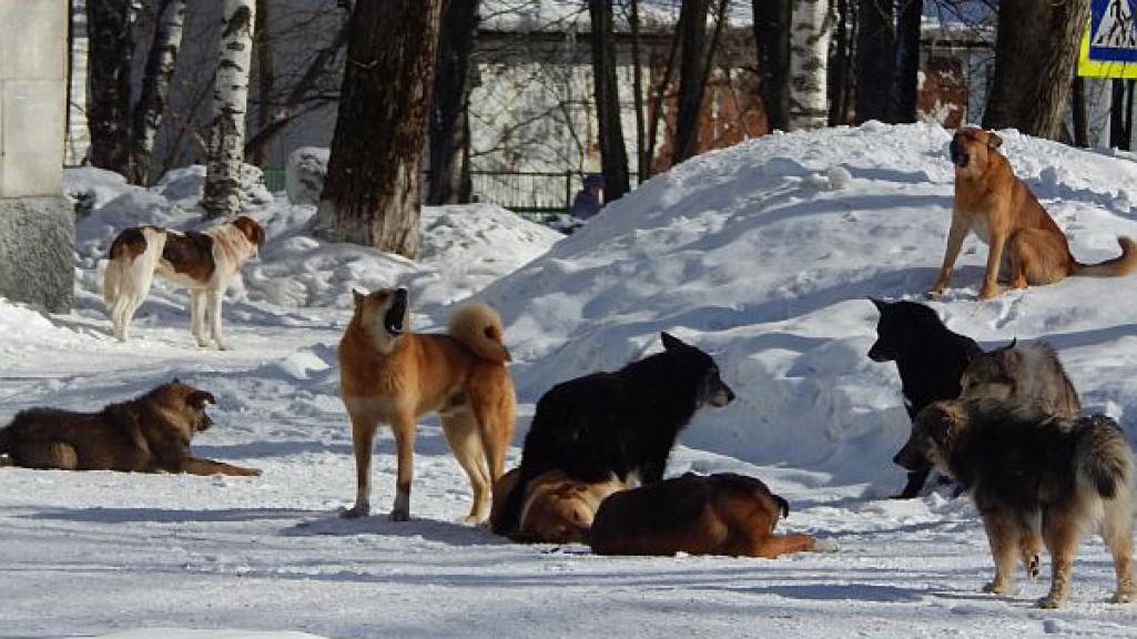 Кормить и гулять по правилам: как будут контролировать закон о домашних животных в Чепецке