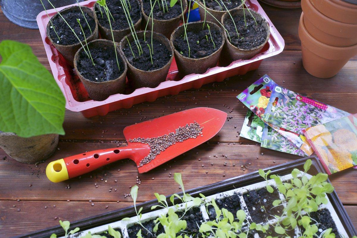 Союз садоводов обеспечил чепчан семенами