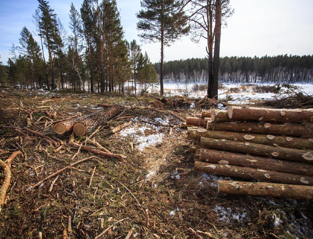 В Кирово-Чепецком районе обнаружили незаконную вырубку леса