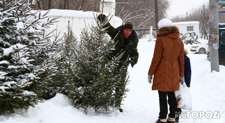 В Роскачестве рассказали, как правильно выбрать живую елку на Новый год