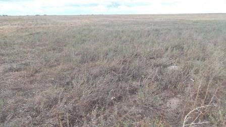 Жителю Чепецкого района выписали штраф за сорняки на земельном участке