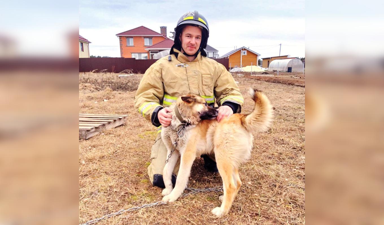 В Кирово-Чепецком районе благодаря собаке удалось обнаружить пожар