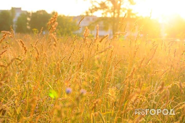 В Кировскую область возвращается лето: как долго продержится теплая погода?