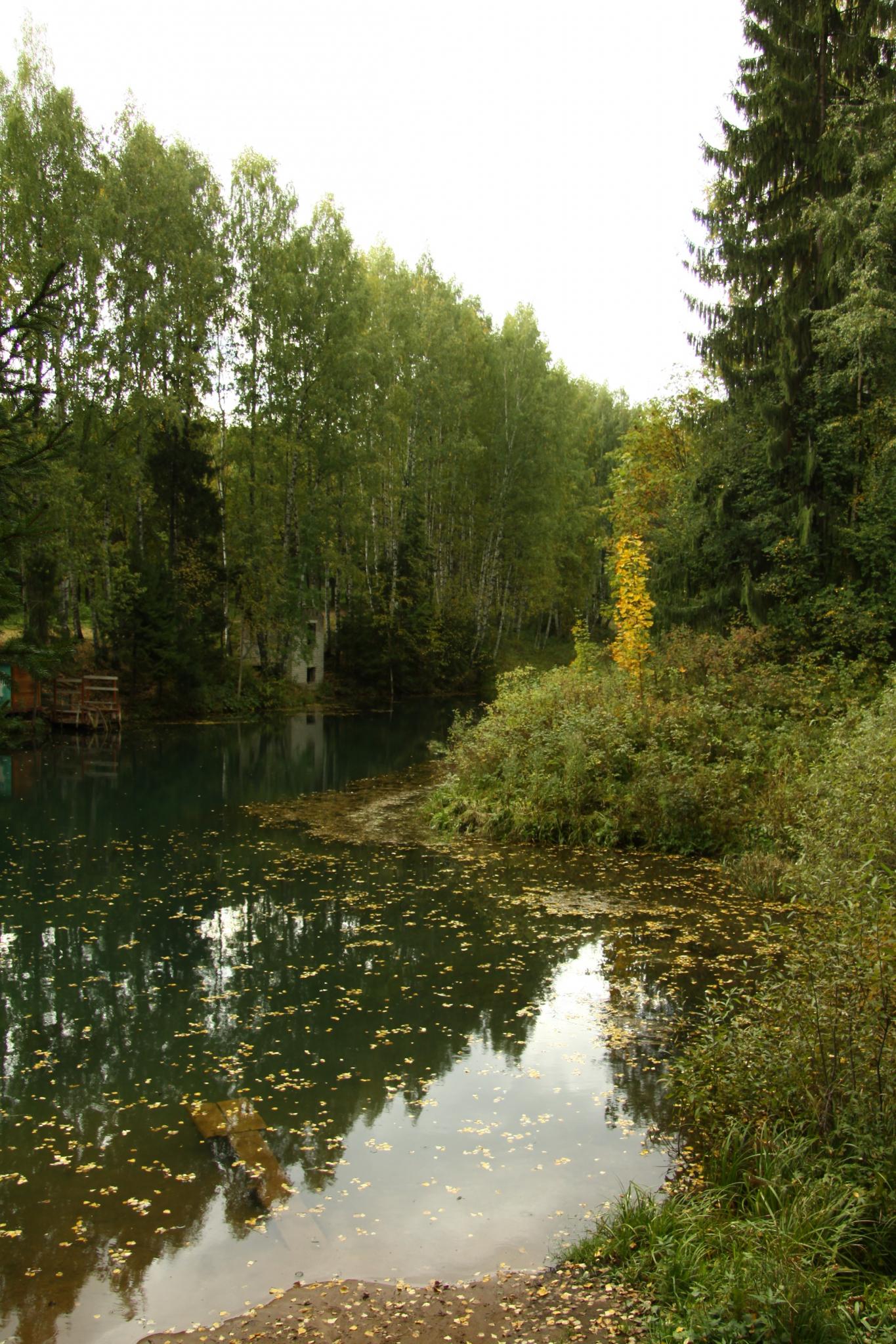 В Кировской области в пруду утонул 4-летний ребенок