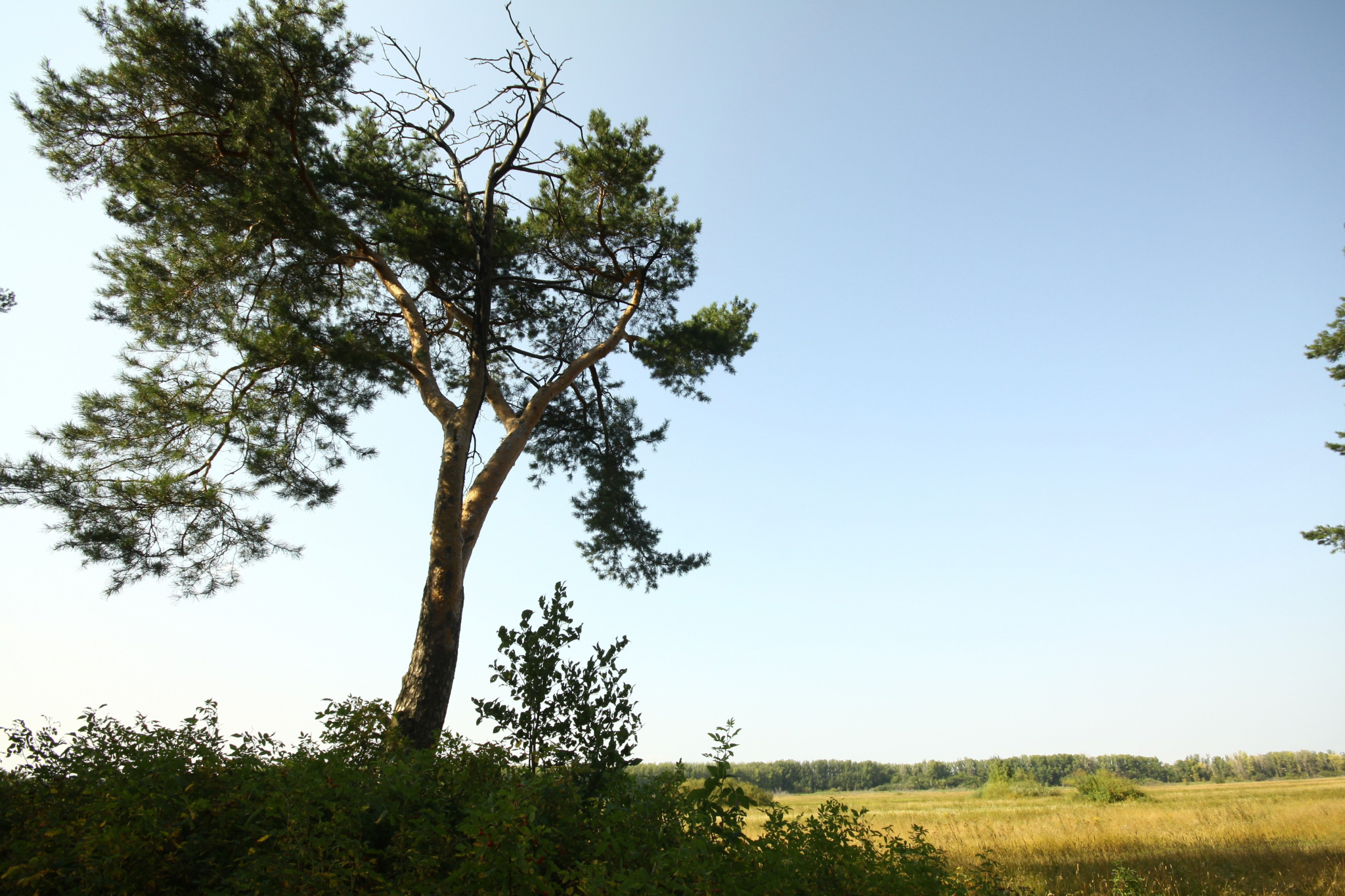 Прогноз погоды в Чепецке: в выходные резко похолодает