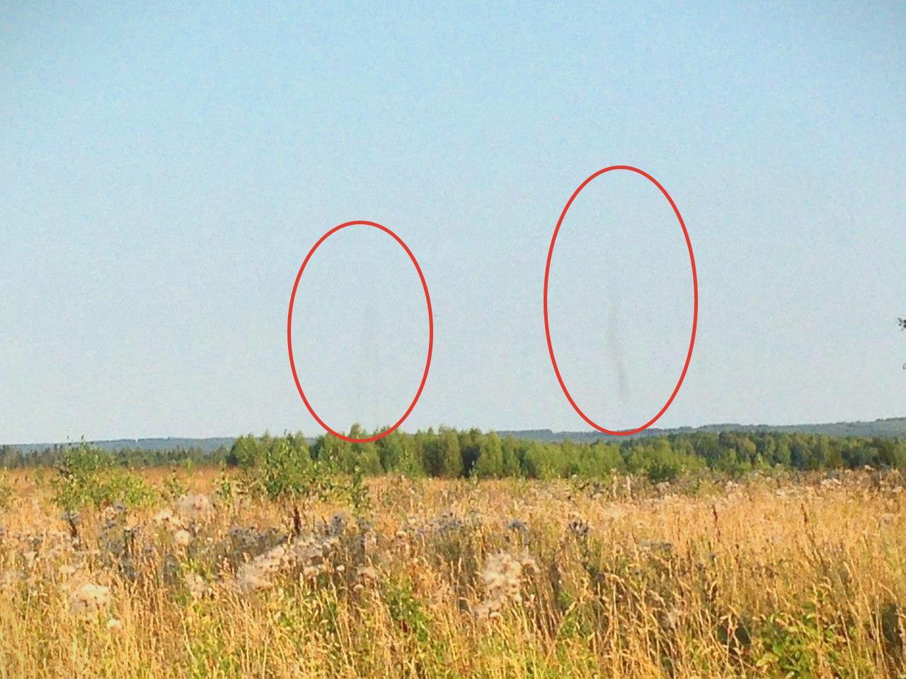 В Кировской области прошел торнадо из насекомых
