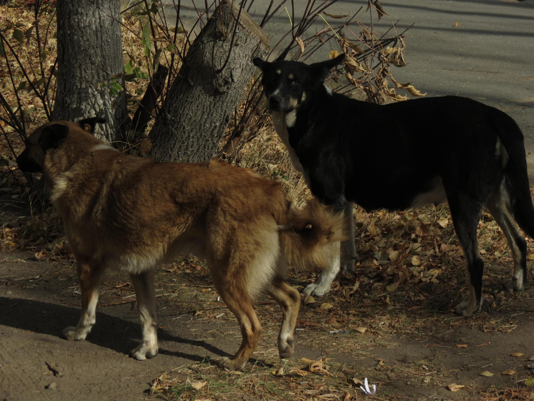 В Кировской области на ребенка со спины накинулась собака