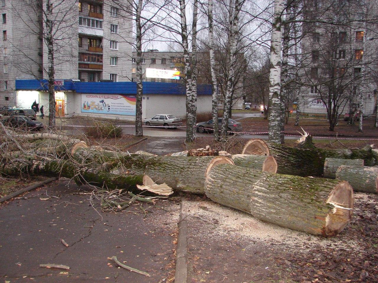 """В Чепецке вырубили деревья на """"аллее любви"""""""