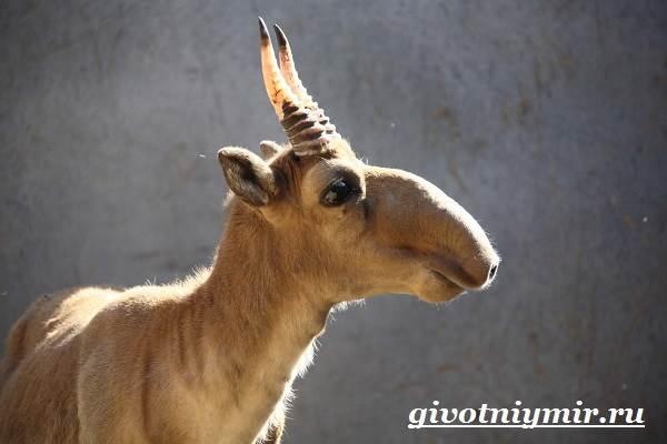 Кировчанину грозит тюремный срок за продажу рогов краснокнижного животного