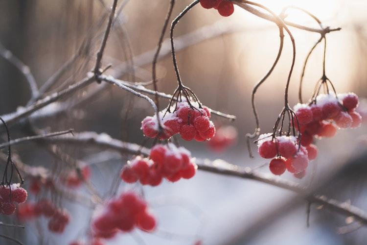 Известно, какой будет погода в третью декаду декабря в Кировской области