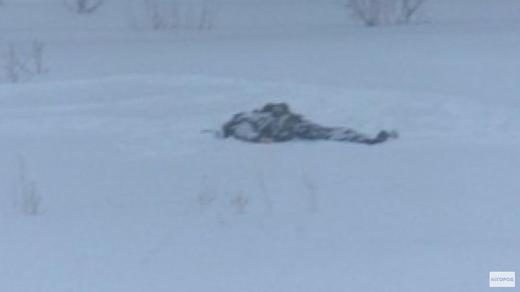 В Чепецке полицейские вынесли из леса замерзшего человека без сознания