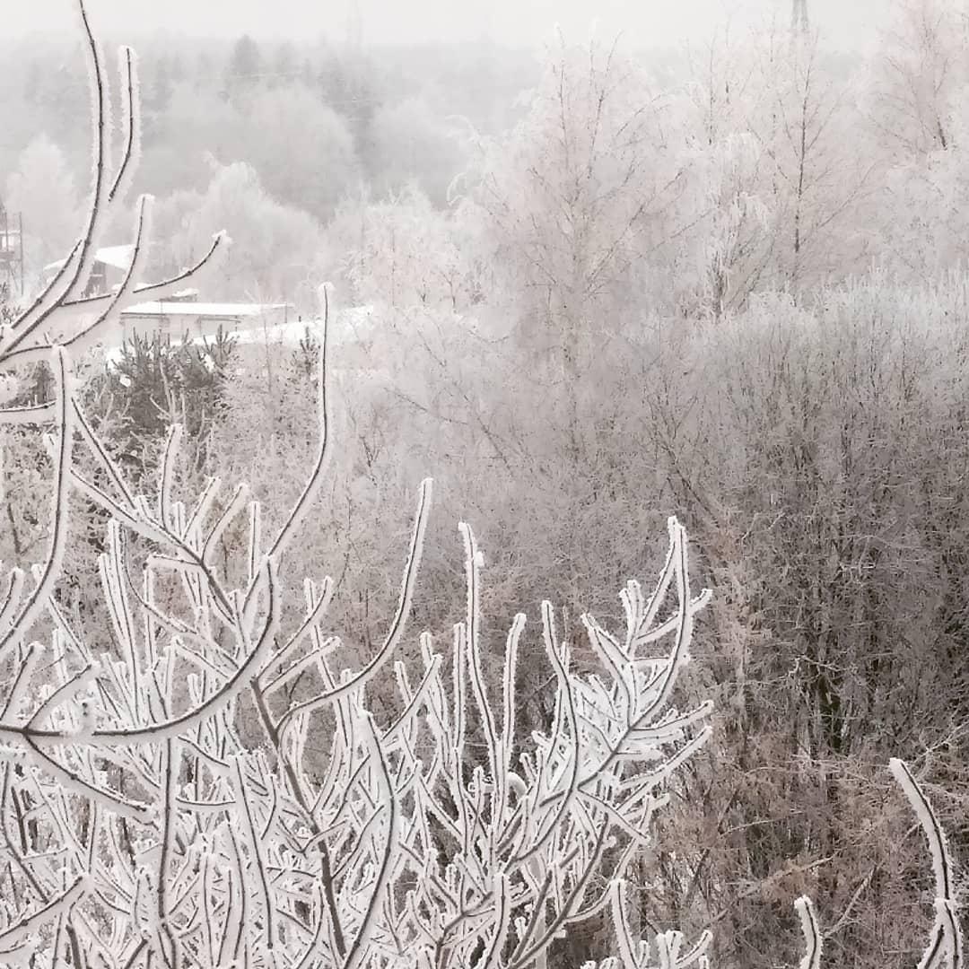 Синоптики рассказали, когда исчезнет белая изморозь на деревьях в Чепецке
