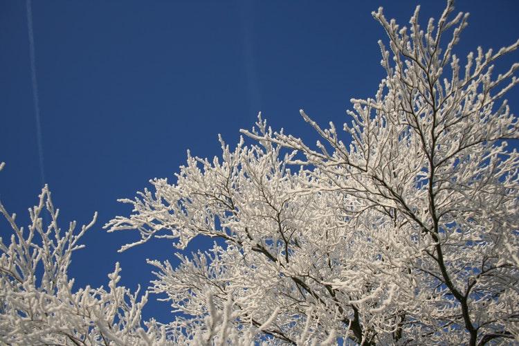 МЧС сообщает о 30-градусных морозах в Кировской области