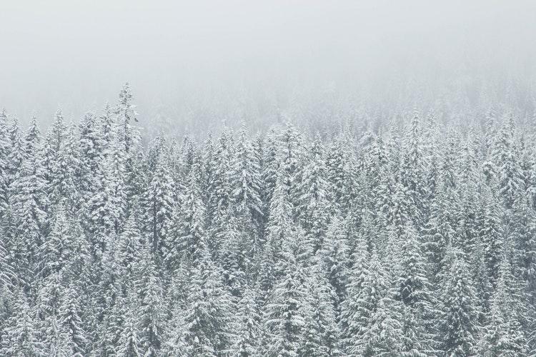В четверг в Кирово-Чепецке ожидается 27-градусный мороз