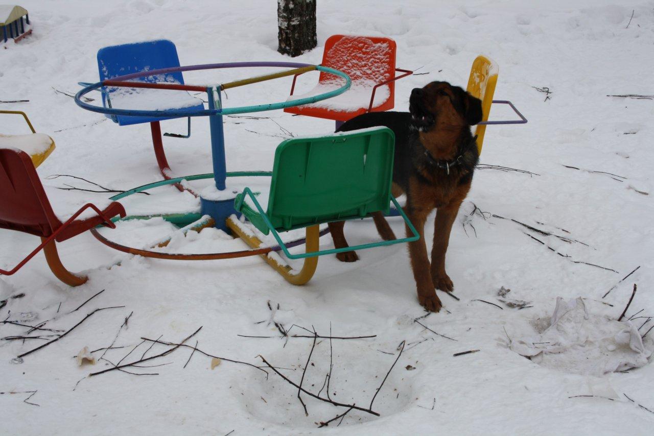 В Кирово-Чепецке начнут отлавливать собак на улице