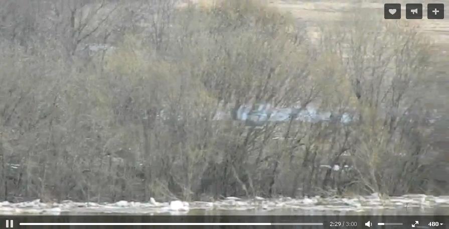 Чепецкие волонтеры пытаются спасти собаку, воющую с другого берега реки