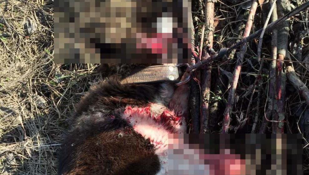В Большой Субботихе расстреляли привязанную к дереву собаку