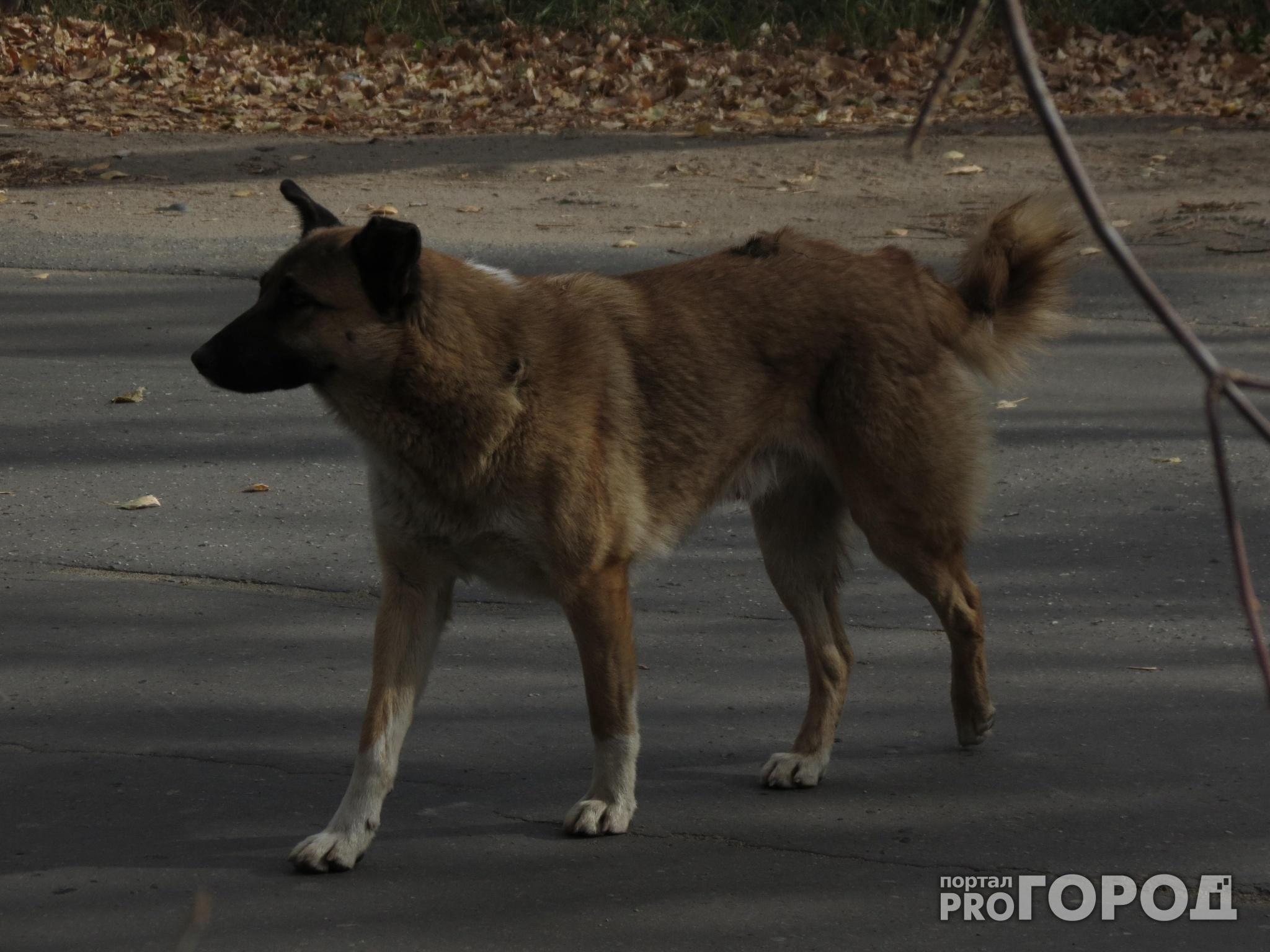 В Чепецке зафиксирован первый случай бешенства у домашнего животного