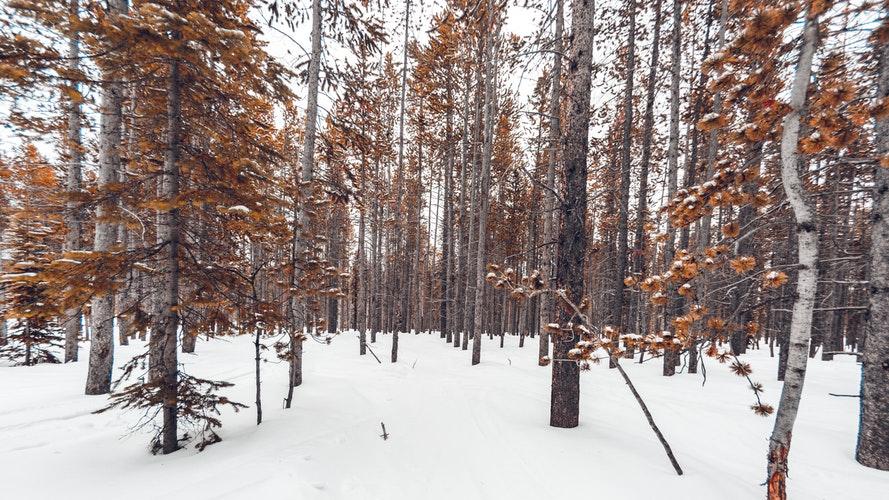 Трое школьников заблудились в лесу в  Кировской области