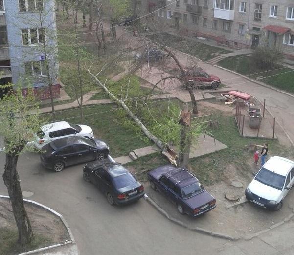 В Чепецке дерево упало в метре от машины, где сидел человек