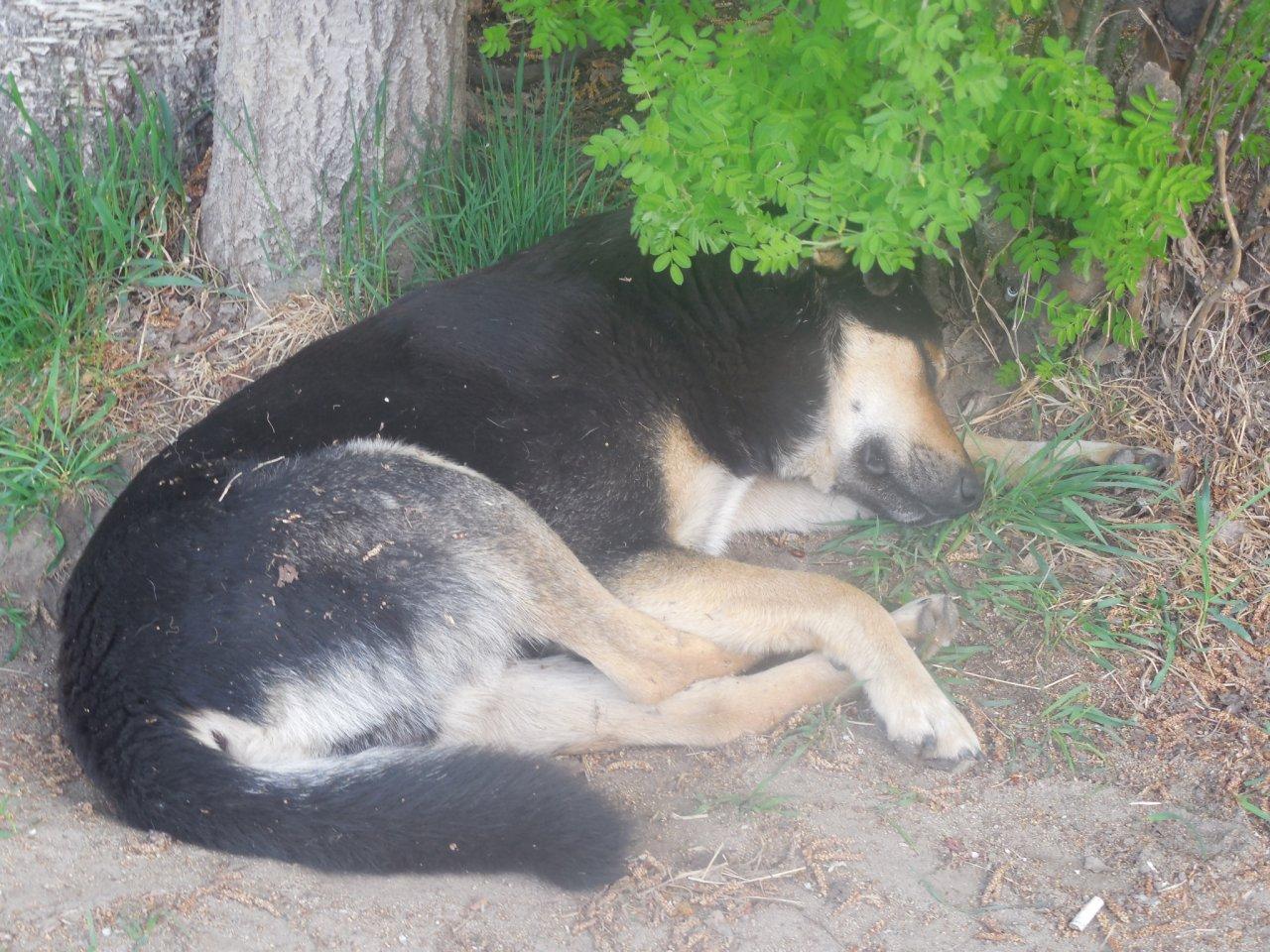 В Чепецке мужчина с 6 этажа сбросил собаку