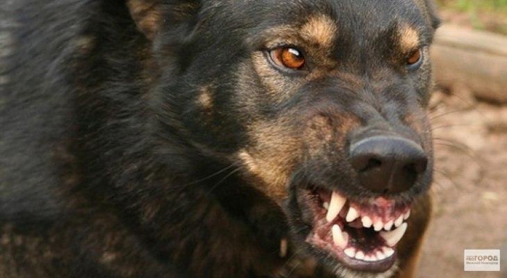 В Чепецке на двух школьников напала собака