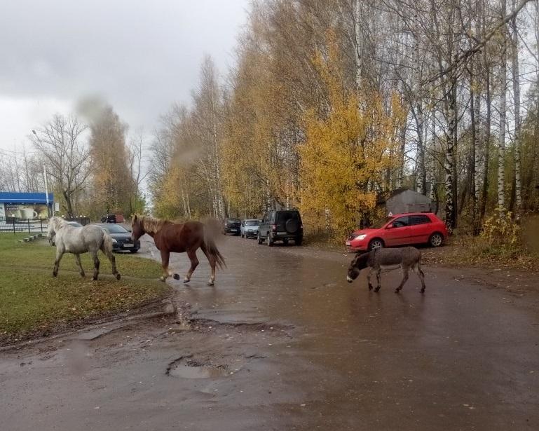 Просроченная икра, агрессивные строители и гуляющие в городе лошади: на что жалуются чепчане