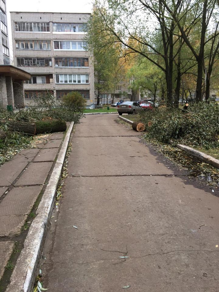 В Кирово-Чепецке двор завалили старыми деревьями