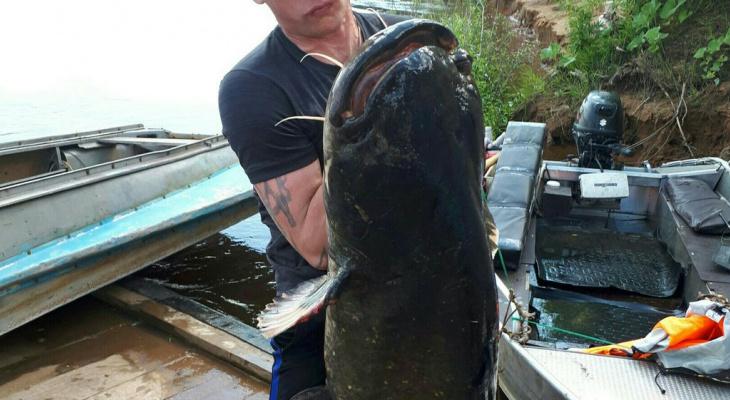 Штрафы за незаконную ловлю рыбы увеличились в 10 раз