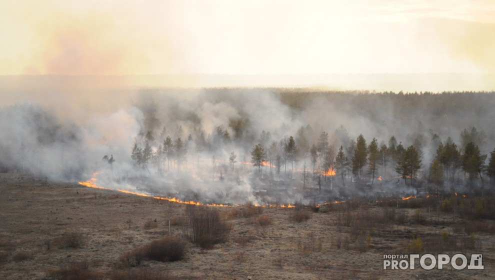 На защиту Каринторфа от пожаров выделят 160 тысяч рублей