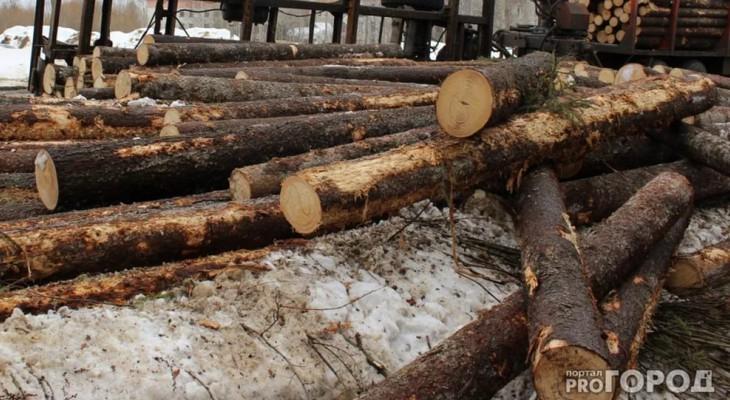 В Чепецке вынесли приговор мужчине, который незаконно вырубил 50 кубометров леса