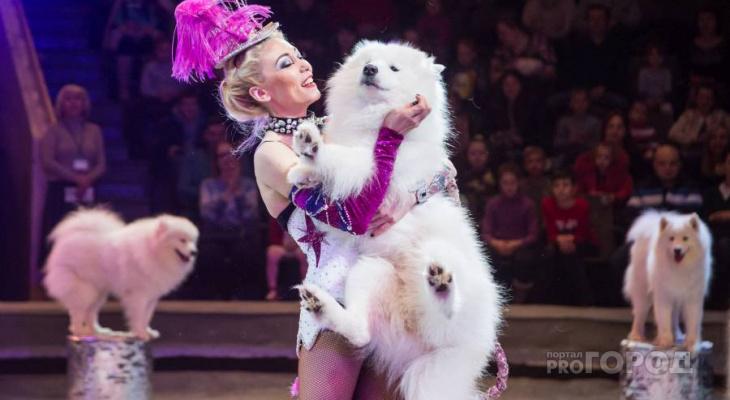 В Чепецке видели пропавшую цирковую собаку по кличке Ангел
