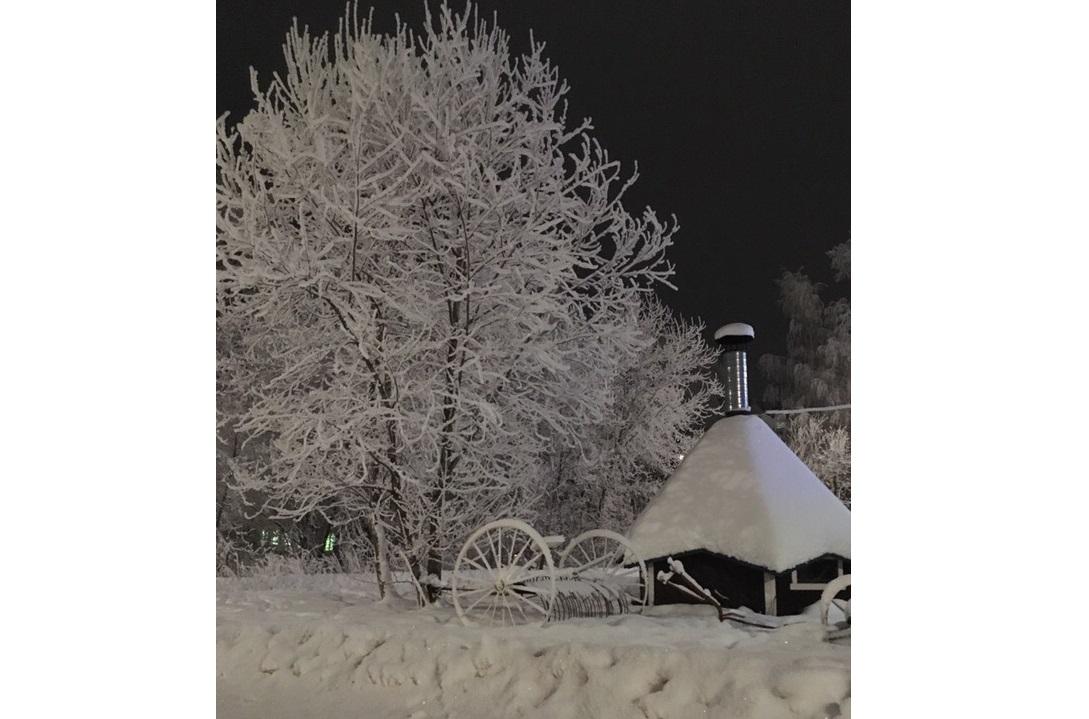 «Город превратился в белую сказку»: чепчане восхищаются деревьями, покрытыми изморозью