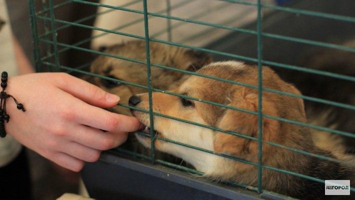 В Чепецком районе собираются построить приют для собак: жители против