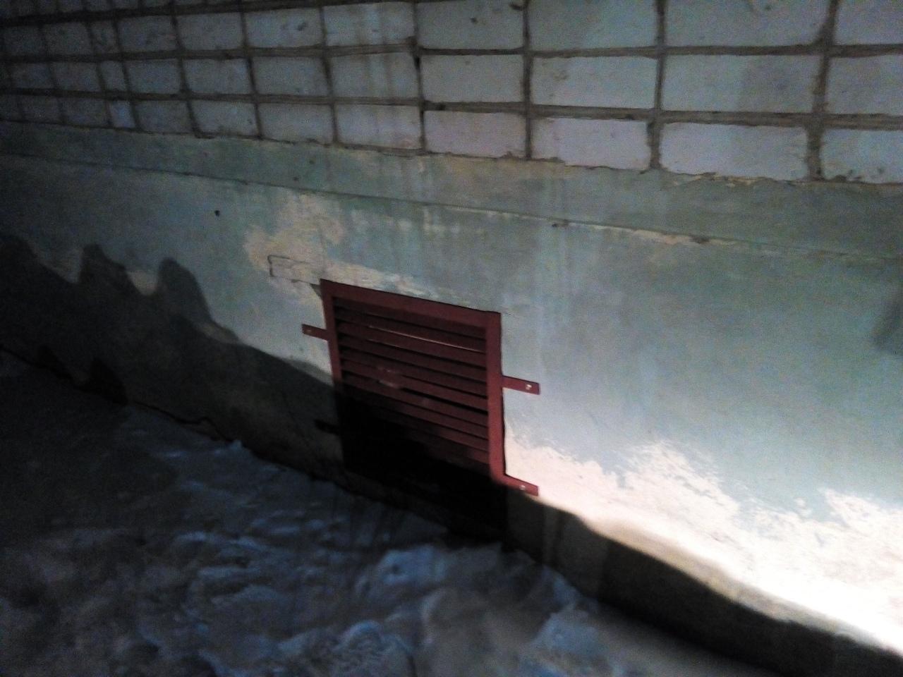 Чепчане спасли кошек, заживо замурованных в подвале дома