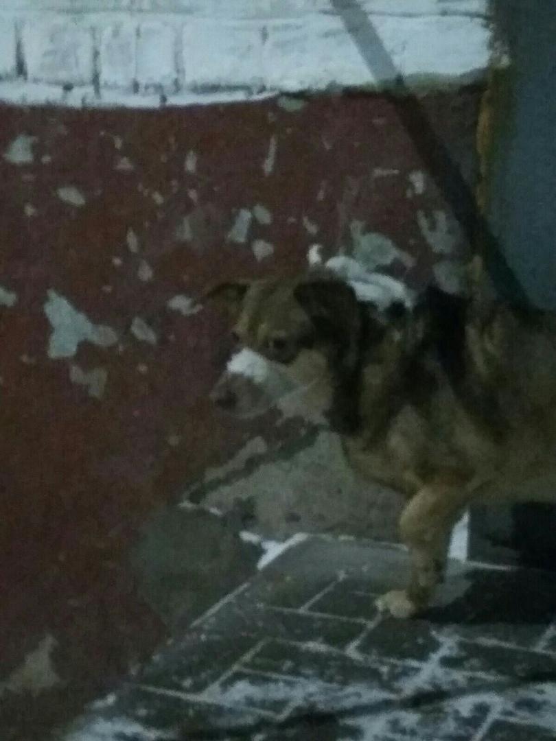 По Кирово-Чепецку бегает собака с перевязанной пастью